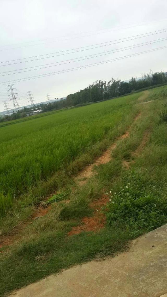 楊梅台31旁農地,桃園市楊梅區民豐段