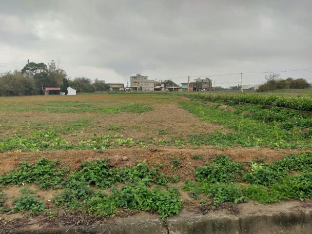 觀音66快速道旁保生農地,桃園市觀音區茄苳坑段